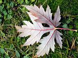 Autumn: leaf