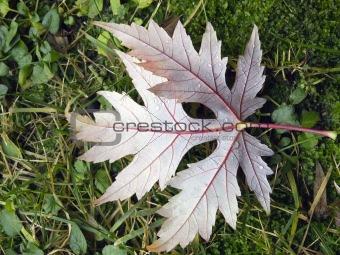 Autumn: leaf