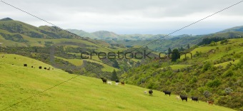 New Zealand country side