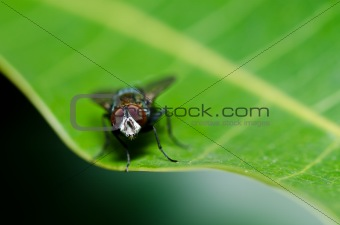 fly in green nature