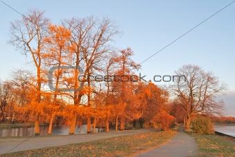 Beautiful autumnal trees at sunset