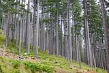 Valia Calda Forest