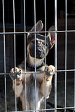 puppy in the dog pound