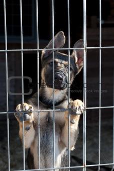 puppy in the dog pound