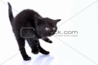 kitteng jumping