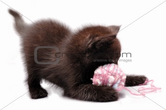 kitten playing with a wool ball