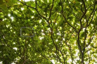 Foliage under the sun