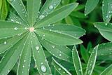 Water drops after rain on green leaves