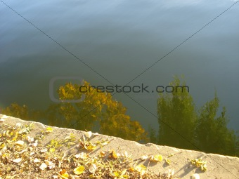 Autumn leaves near water