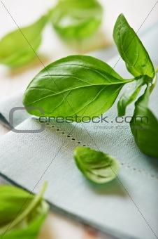 Fresh basil on blue napkin