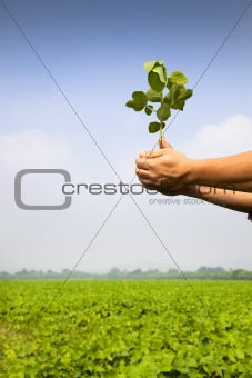 hand of farmer holding sapling on the farm