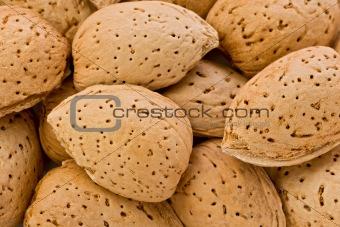 Almonds in their Shells (Prunus amygdalus)