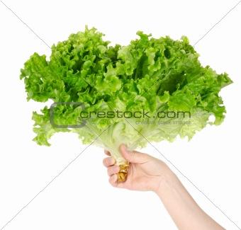 Lettuce in hand