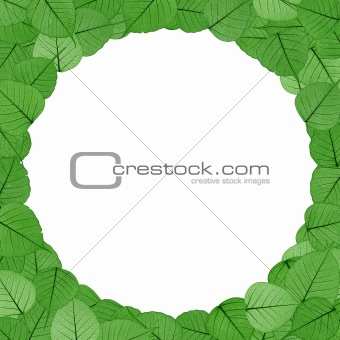 Skeletal leaves on white background - frame . Clipping path included.