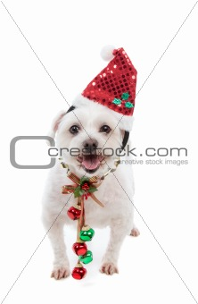 Festive Christmas puppy with jingle bells