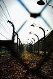 Oswiecim Fence (Auschwitz)