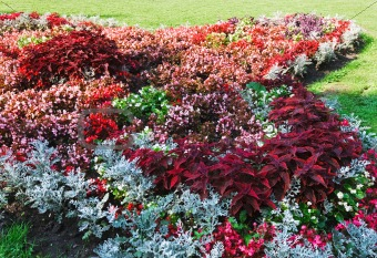 flowerbed composition
