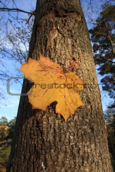 Autumn leave on tree