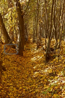 Ravine in autumn woods
