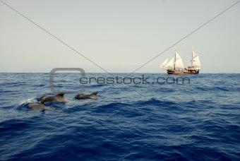 Three dolphin and the ship
