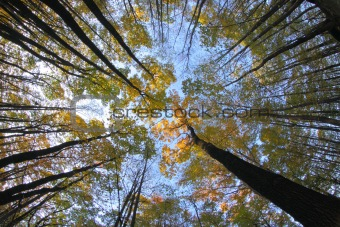 very nice autumn forest