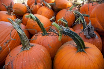 Pile of pumpkins from a pumpkin patch