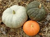 three colorful pumpkins