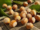 sunny nuts