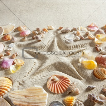 beach white sand starfish print many clam shells