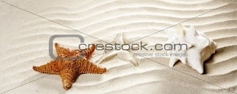 caribbean tropical wavy white sand starfish shell
