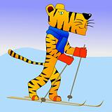 Tiger on ski