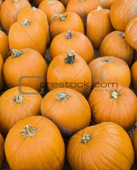 Group of pumpkins.