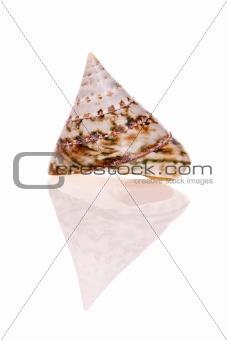Top Seashell