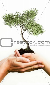 tree growing from hands
