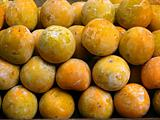Chinese Persimmons