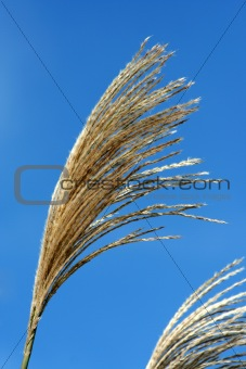 Fall bush seeds