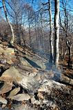 Burned forest