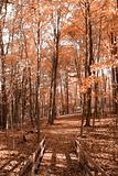 Bridge in autumn woods