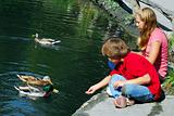 Children feeding ducks