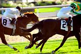 Horses racing