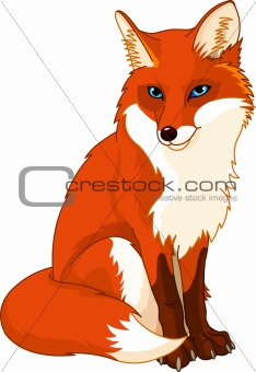Cute  fox