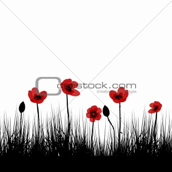 Black field with red poppies