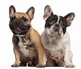 French Bulldog, 2 years old, and French Bulldog, 1 year old, sitting in front of white background