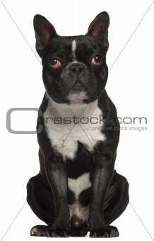 French Bulldog, 18 months old, sitting in front of white background