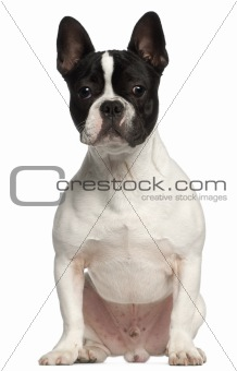 French Bulldog, 7 months old, sitting in front of white background