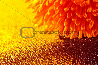 Beautiful drops of water and orange flower