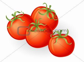 Tomatos illustration