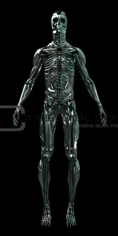 Cyborg Human Skeleton Android