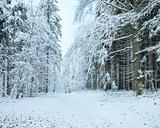 First winter snow and last autumn leaves in forest