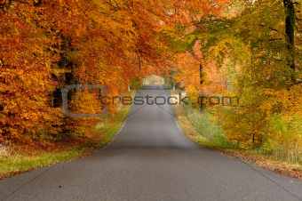 Road in fall